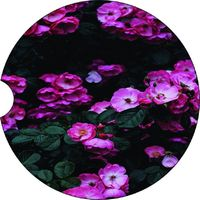 2 Absorbent Car Coasters of Flowers #22. Car Accessories for her, Auto Coaster, Coaster, Cup Holder Coaster, Gift For Her, For Him $14.00