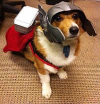 I want to feel bad for this dog...but I am too busy laughing at his Thor costume.
