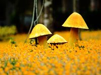 Yellow Mushrooms Standard Wallpaper Picture