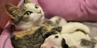 Stray Cat Takes Day-Old Puppy Off The Streets, Shows The True Meaning Of Family