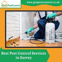 We offer successful treatment and removal of ants, bed bugs, bees, birds, cockroaches, fleas, foxes, mice, moths, pigeons, rats, squirrels, and wasps.