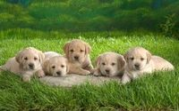 National Puppy Day- check out the most popular puppy names for 2011