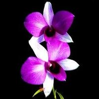 Zynah Orchids, is a one stop shop for all your orchid related needs. Within the limited period, ZynahOrchids.com is now a well known best online portal for Orchid plant online Purchase. The brand is making a conscious effort to bring the satisfaction to s...