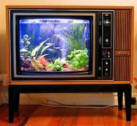 How to turn an old TV into an fish tank