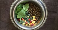 Want Your Dog to Live to 30? Add This to Their Dry Kibble Diet:: leafy greens plus yellow-orange vegetables at least 3x/week. Try this!