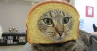 Cat Breading! in ACTION! BAD KITTY!