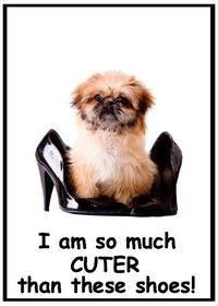 What an adorable picture of dog and shoes. Of course the dog is MUCH cuter!!