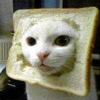 For Beth: Cat breading!!!! Omg your the best courtney