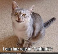 Funny Cat Pictures With Words | Funny Cats - Animal Humor Photo (16335569) - Fanpop fanclubs