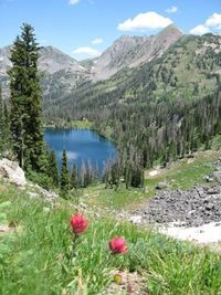 Hiking in Colorado. So many years a favorite spot. Will I be able to return? Hope so.