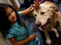 Dogs, cats, birds, fish and even horses are increasingly being used in settings ranging from hospitals and nursing homes to schools, jails and mental institutio