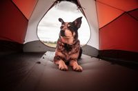 How To Choose Dog Friendly Tent?