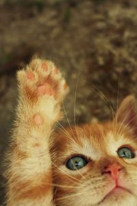 the cutest thing ever. i normally can'tpostanimals because i end up crying because i love animals so much but this one reminds me of my baby kitty :)