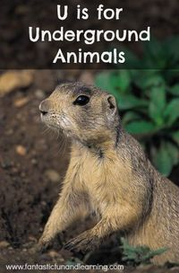 Teachers' guides, book-related projects, crafts and a snack to give you a little inspiration for your own underground animal theme.