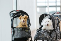 Fur babies in their fave 5-in-1 travel system. Ready for the next adventure!