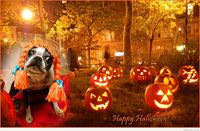 Halloween desktop background with funny dog