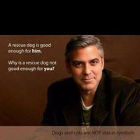 Don't take it personally if you apply to adopt a dog and the shelter or rescue group requires a home visit. Even George Clooney got one.The actor tells Esq