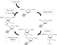 chemical synthesis of dna by phosphoramidite method