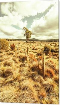 Button Grass Plains - Wall Art Print | Pastoral landscape on grassy fields and farmyard fences in outback Australia. Bronte Park, Tasmania | #wallartprints #fineartwork #landscapeart #brontepark #tasmania #buttongrass #outbackoz #homedecor