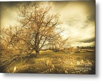 Autumn Dramatics Metal Wall Art   Twisted eerie scene of a leafless orange tree with fire-like branches blowing in an atmospheric breeze. Oatlands Autumn Tree, Tasmania, Australia   #atmospheric #dramatic #autumnart #landscapeartwork #landscapeart #photop...