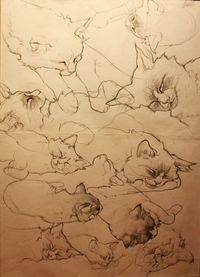 cats4 by Anna Egorova, via Behance