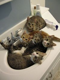 How many cats can fit in a bathroom sink? A new Guinness world record?