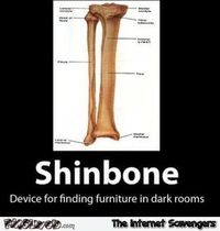 Funny shinbone definition