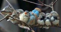 Cute family of finches