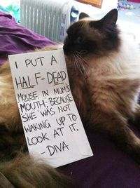 the ultimate pet shaming. this is golden!