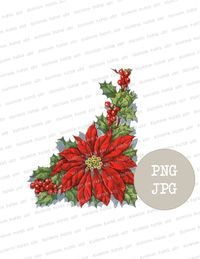 Christmas Poinsettia Clipart, Digital Christmas Graphic, Instant Download Christmas PNG Clip Art for Prints, Cards, Crafts