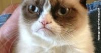 Happy Birthday Funny Grumpy Cat Meme..........................xD am I a horrible person for finding this funny?