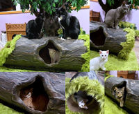 Unique Cat Trees