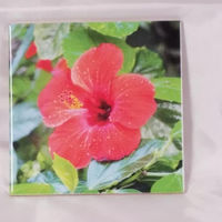 6x6 Hibiscus Flowers Ceramic Tile Home Decor Decoration Art Accent Gifts for Him Gifts for Her $15.99