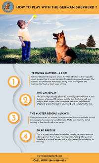 Find out here how to play with the German shepherd Dog. Visit us to know more https://topshepherd.com/blog/how-to-play-with-the-german-shepherd-/