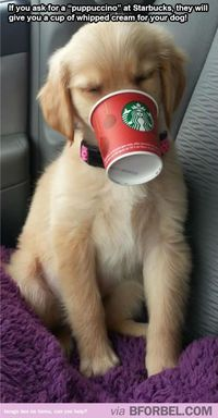 starbucks, dogs and whipped cream.