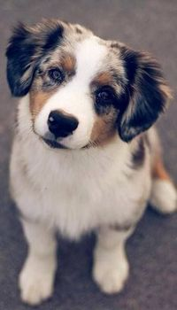 Please Love Me! At Orchard Lake Pet Resort we strive to provide the best overnight care and grooming services for our canine clients! Call (248) 372-7000 or visit our website www.orchardlakepetresort.com for more information about the services we ...