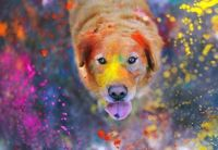 Colorful pup
