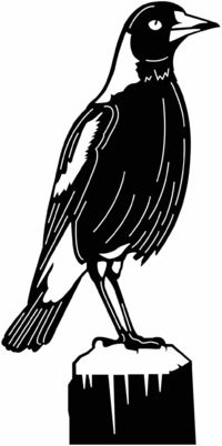 Magpie Bird Just for: $24.99