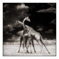 Another by Nick Brandt, I love the sky in this one.