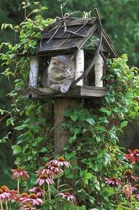 cat houses, bird houses and tree houses.