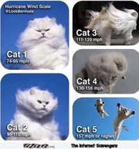 Hurricane wind scale using cats humor #funny #humor #funnypicture #funnycat #cathumor #PMSLweb