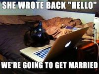 online dating, cats and cat faces.