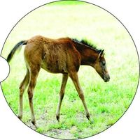 Horses #9, 2 Absorbent Car Coasters, Car Accessories for her, Auto Coaster, Coaster, Cup Holder Coaster, Gift For Her, For Him $14.00