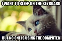 First World Cat Problems: Don't You Have Email to Check? Statuses to Update? LOLz toMake?