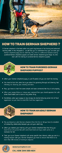 Find Out here the difference between the training of purebred German shepherd puppies and adult German shepherd guard dogs. So, let's check out here how to train German shepherd? Visit us now