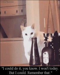 I could do it , remember that funny cat gif #funny #humor #gif #cathumor #catgif #PMSLweb