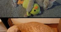 There are very few things in life as comforting as your childhood stuffed animal, as this cat clearly...