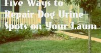 5 Ways to Repair Dog Urine Burns on Grass from Condo Blues