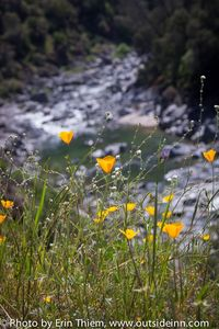 Time to star thinking about wildflower hikes down at the South Yuba River.
