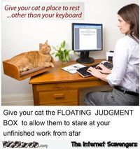 Funny cat floating judgment box #funny #cat #funnycat #humor #PMSLweb